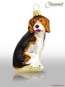 größere Formen Hund Beagle