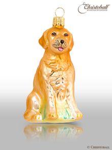 größere Formen Hund Goldi